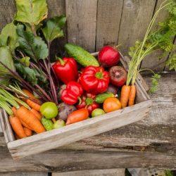 Poljoprivredna dobra